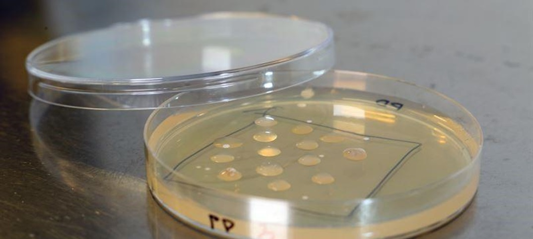 Microbes degrade plastic waste to valuable products like