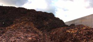 Biomasse, Verwertung von Laub: Neuer Brennstoff für klimaneutrale Energie